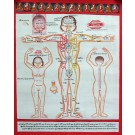 Tibetischer Medizin Yoga Thangka  Nr. 3  40 x 49cm